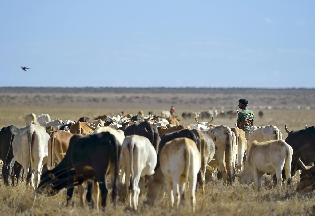 Kenya, like elsewhere in the Horn of Africa, is currently suffering from drought