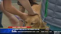K9 comfort dogs help in a way nobody else can