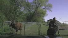 Texas police officer has close encounter with runaway cow