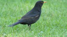 Quiz: Wer kennt diese Vögel?