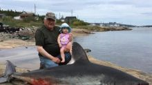 That's no seal: Makkovik man accidentally nets shark