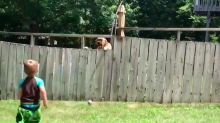 Adorable toddler and pup play a game of fetch despite the backyard fence dividing them