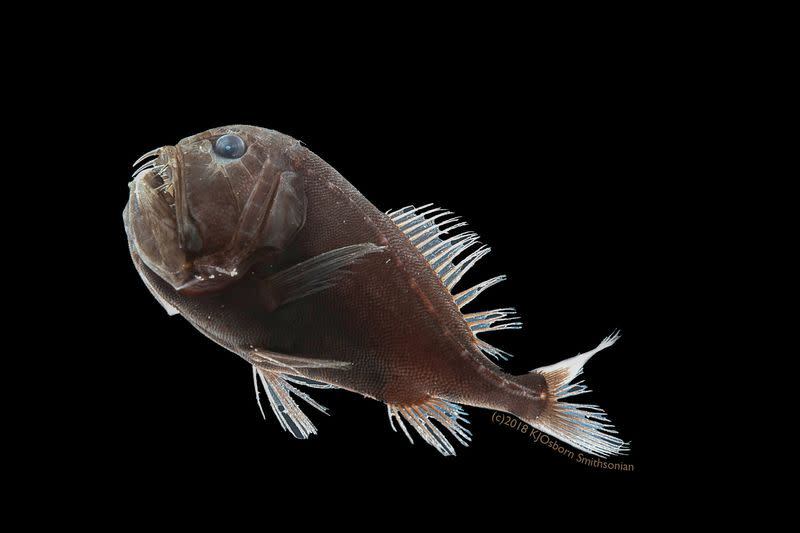 Secrets of deep sea dwelling ultra-black fish unravelled