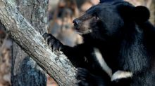 Bear attacks worker at a wildlife resort in Pennsylvania