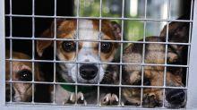 Michigan toughens laws on animal abusers