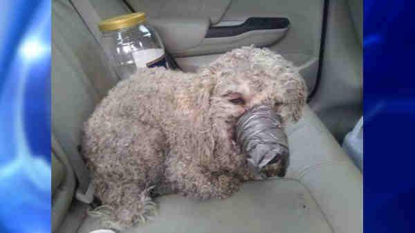 Dog found duct taped and beaten in Bronx