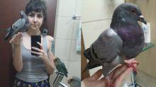 Mulher 'adota' pomba no Paraná e surpreende a internet