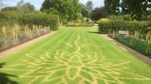 Don't walk on the grass! The work behind RHS Wisley's 'turf art'