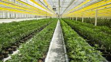 Green Growth makes hostile bid for Aphria official