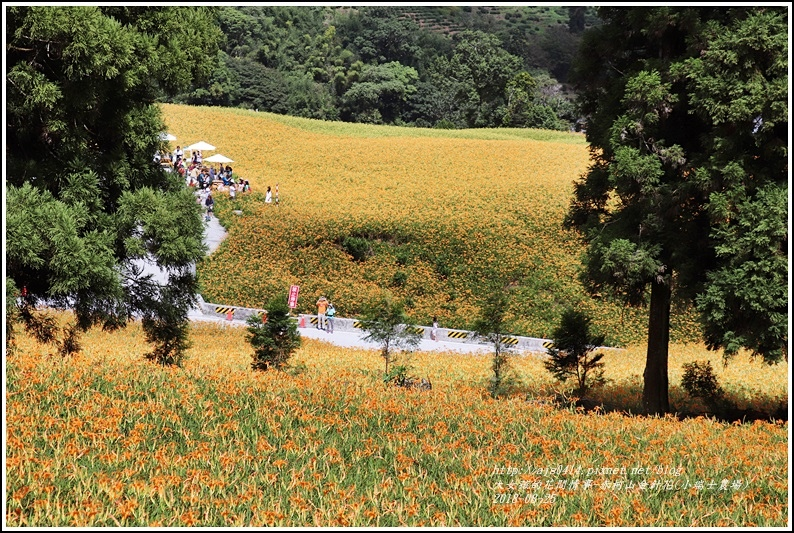 赤柯山金針花(小瑞士農場)-2018-08-09.jpg