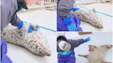 【新片速報】日本超嗲海豹仔 反肚摟摸捉實飼養員隻手