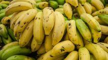Los científicos emprenden una lucha contrarreloj para evitar la desaparición del plátano