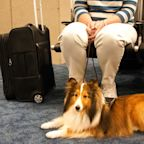 Delta's Emotional Support Animal Policy Just Got Way More Strict