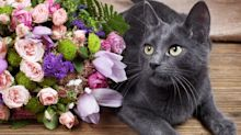 Warning for cat-owning mums receiving flowers this Mother's Day