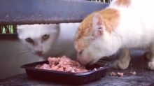 This cat does not want to share its food