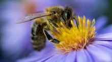"""Disparition des insectes en Europe : """"C'est l'ensemble de la biodiversité qui est en déclin"""""""