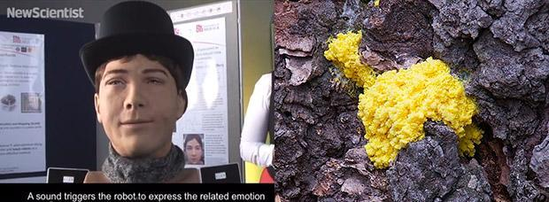 Researchers' robotic face expresses the needs of yellow slime mold (video)