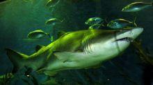 Tiburón nodriza muerde a hombre en Florida sin soltarlo durante 15 minutos