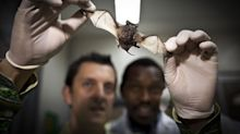 A Bat Cave Run by Monks Shows It's Hard to Banish Virus Risk