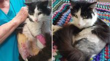Incredible transformation of cat who was nearly tortured to death