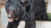 民進黨對國民黨太仁慈?網:護照上面「那顆」應改成台灣黑熊