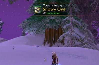 Get your Winter Squid and Snowy Owl while you still can
