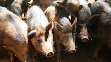 Union County hog-waste plant cleared for pilot program