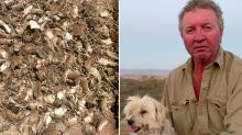 'My little mate': Farmer loses dog to mouse plague poison