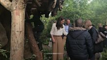 Duchess of Cambridge climbs her tree house at Chelsea Flower Show