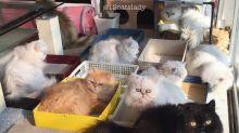 """""""Senhora dos 12 Gatos"""", a senhora dos gatos que faz sucesso na internet"""