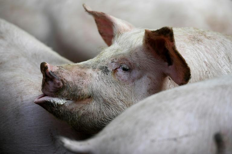France is the third largest pig producer in the European Union