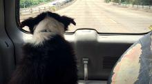 Un perro lleva 83 días sin moverse del lugar donde atropellaron a su dueña