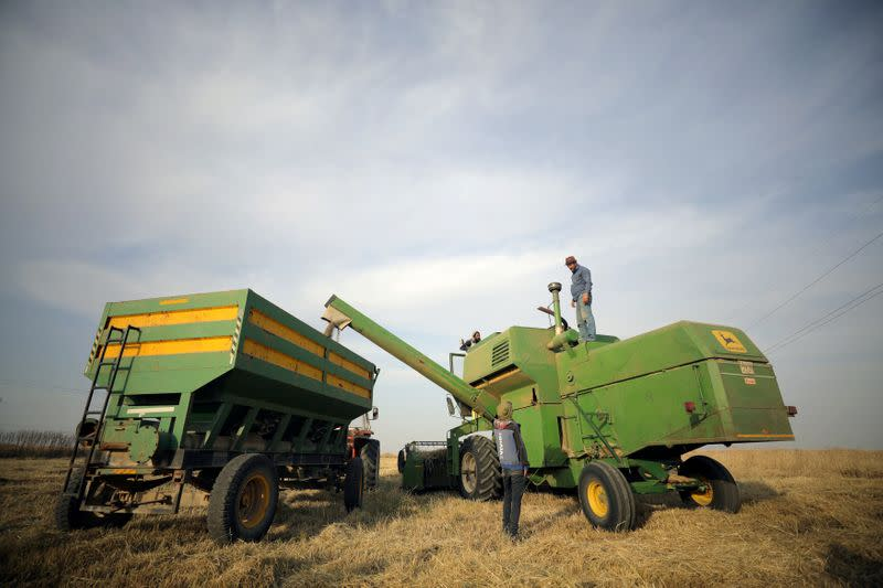 FILE PHOTO: A combine harvester harvests wheat at a field in Qamishli