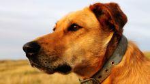 Diese Krankheiten können Hunde beim Menschen erkennen