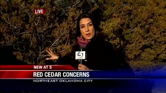 Removing cedar trees key to fighting wildfires