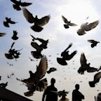 China bans pigeons and drones in Beijing ahead of 70th anniversary