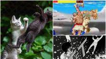 日本「最強流派」喵喵拳 網民狂出圖回應