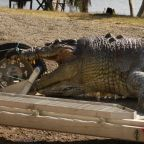 100-Year-Old Monster Crocodile Shot Dead Could Spark Deadly Power Struggle in Australia Rivers
