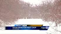 Cold March is good for fruit crops