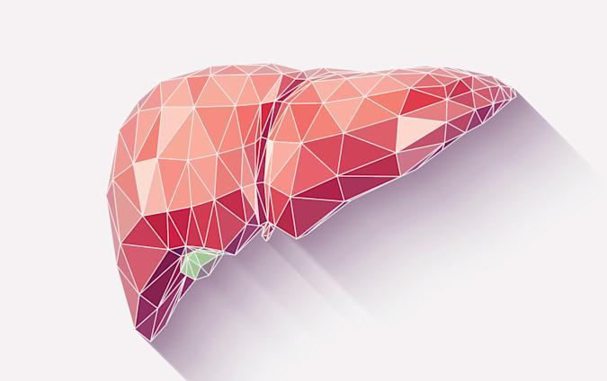 Vector illustration of human liver with faceted low-poly geometry effect