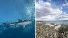 Fisherman bitten by shark at popular WA tourist spot