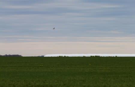 A bird flies over a field of wheat on farmland near Azul
