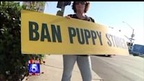 City Votes To Ban Retail Sale Of Pets