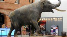 Los animales machos están sobrerrepresentados en los museos de historia natural