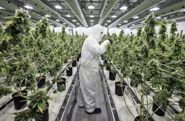 Massive meta-study confirms the health benefits of cannabis