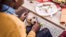 The Christmas foods you should not feed your pets at the dinner table