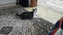 Cat realizes she's being filmed, has epic reaction