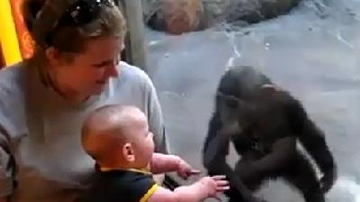 Baby And Chimp Become Best Friends