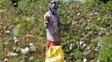 Andhra Pradesh investigates planting of Monsanto's unapproved GM cotton