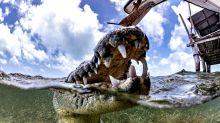 Crikey! Photographer gets up close with dangerous crocs